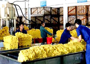 Việt Nam Xuất khẩu cao su đứng thứ năm thế giới