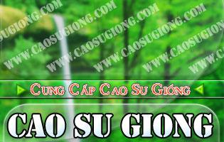 Cao su giong, caosugiong.com