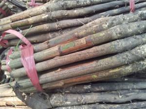 Cao su giong stump tran lh 90952
