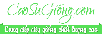 Cao Su Giống.com | Cây giống cao su | Cao Su Giống Hạnh Logo