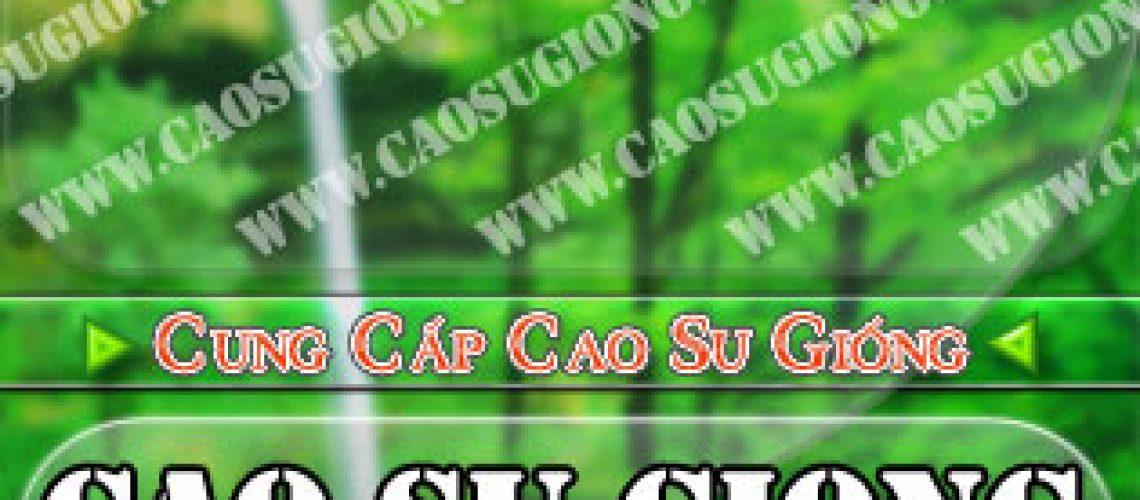Nhiều thuận lợi trong đầu tư trồng cao su tại Oudomxay (CHDCND Lào)