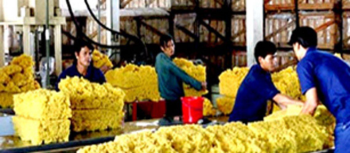 Hỗ trợ doanh nghiệp ngành cao su trong thời kỳ kinh tế khó khăn, cao su giống, giống cao su, cao su